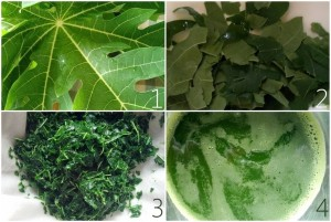 Making papaya leaf juice