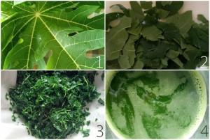 Making papaya leaf juice